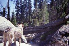 Cheyenne belongs in the forest.